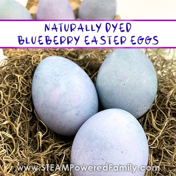 blueberry dyed easter eggs